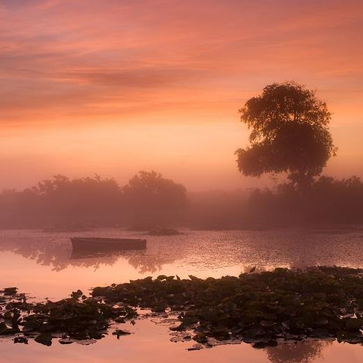 The New Forest Landscape Photography