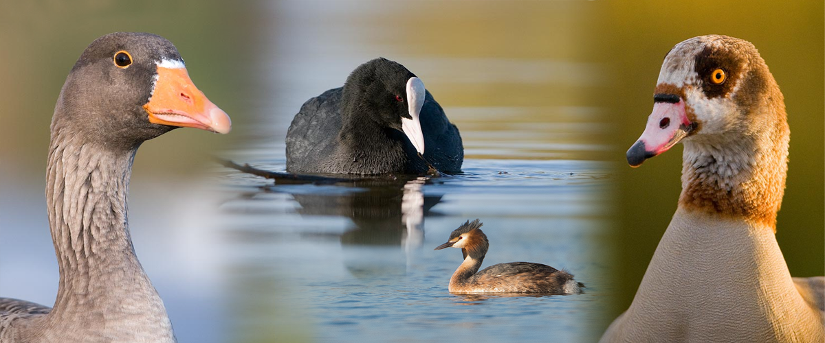 Water Birds Photography